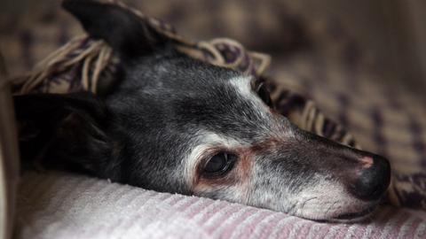 Több százan kísérték utolsó sétájára a haldokló kutyát