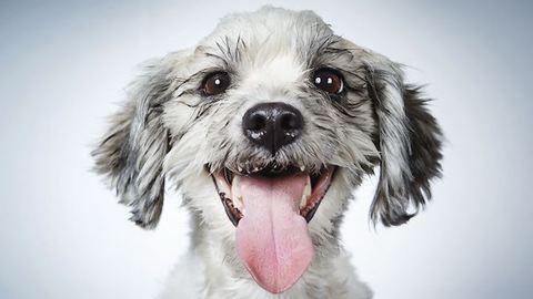 Divatfotós segít új otthonra lelni az elhagyott kutyáknak