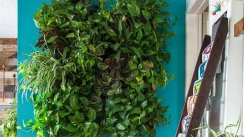 5 házi praktika a szép és egészséges szobanövényekért