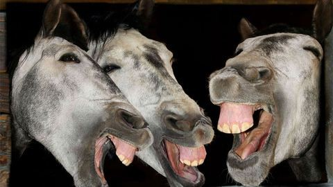 Elszabadult lovak rakoncátlankodnak Győrnél