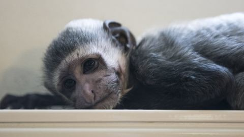 Elárvult a Veszprémi Állatkert egyik legcukibb lakója – fotók