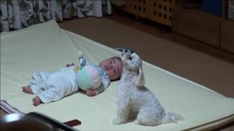 Ha a kisbaba sír, rázendít a kutya is – tüneményes videó