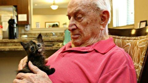 Kiscicák adnak újra életkedvet az idősotthon lakóinak