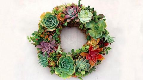 Készítsd el az idei karácsony legtrendibb koszorúját pozsgásokból!