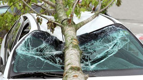 Fát döntött az autóra a szél, újra kellett éleszteni a bennülőt