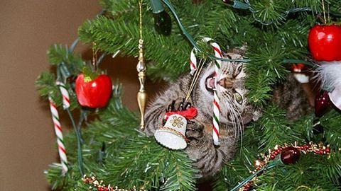 Így fogja elpusztítani a macskád a karácsonyt – vicces fotók