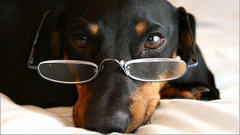 A kutyád sokkal több dologra emlékszik, mint gondoltad volna