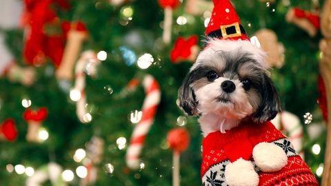 Tudjuk, hogy karácsony, de légyszi, ne adj alkoholt a kutyádnak...
