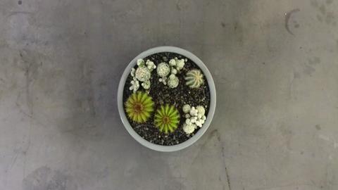 Mutatós kaktuszos asztaldísz 3 lépésből – videó