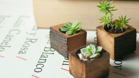 Csodaszép fa lakásdekorációk a természet szerelmeseinek