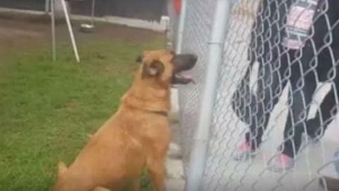 Elveszett kutyájukra találtak rá a menhelyen, de egy másikat fogadtak örökbe helyette
