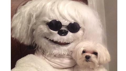 A nap fotója: kutyájának öltözött a nő