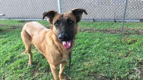 Fájdalom: a kutya azt hitte, újra családjával lehet, végül másik állatot vittek haza