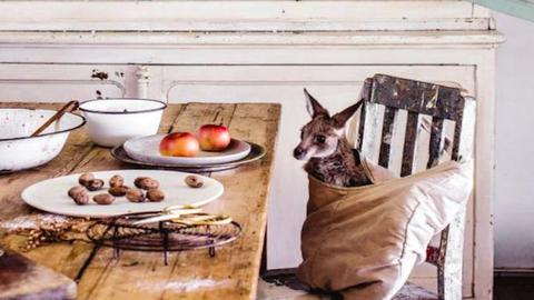 Ilyen a karácsony egy kengurubébivel – tündéri fotók