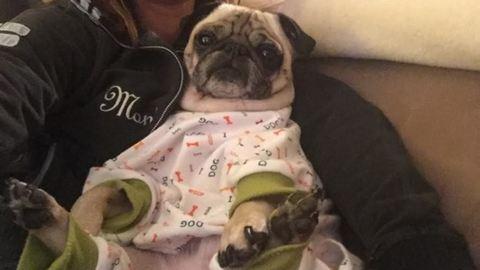 12 cuki állat, aki már teljesen készen áll az alvásidőre