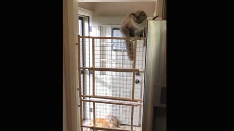 Vicces videó: ez a macska tényleg nem ért a szép szóból