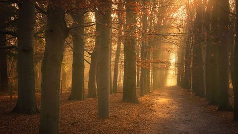 Mágikus fotók holland erdőkről