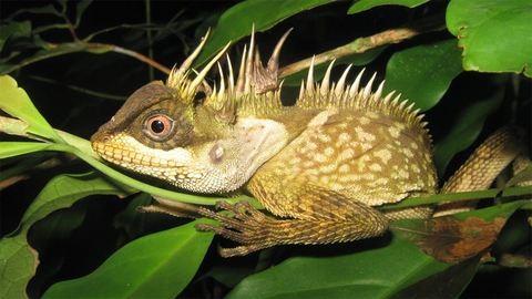 163, korábban ismeretlen állat- és növényfajt fedeztek fel tavaly