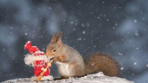 Ünnepi cukiság: mókusok karácsonyi hangulatban