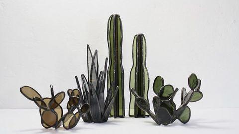 Pozsgások üvegből – azoknak, akik még kaktuszt sem tudnak gondozni