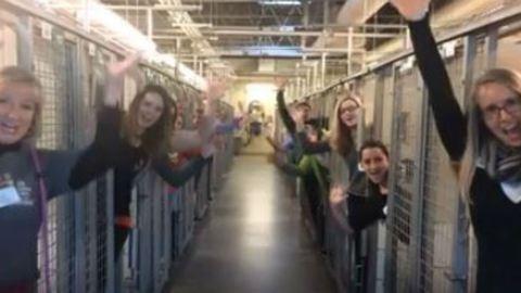 Cuki videóval ünnepli a menhely, hogy minden védencük gazdisodott