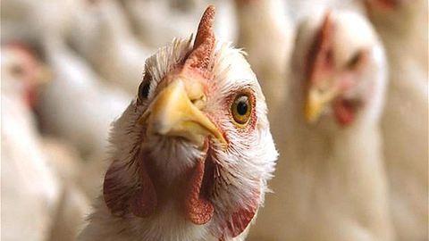 Újabb embereket fertőzött meg a madárinfluenza