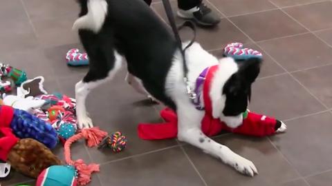 Ezeknek a menhelyi kutyáknak és a cicáknak volt a legboldogabb karácsonyuk – videó