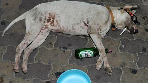 Díjnyertes kutyák mellett csempészték a cigit, Röszkén lebuktak