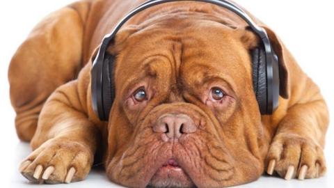 Rémület és rohanás: Budán találták meg a Rákosokról elszökött kutyát