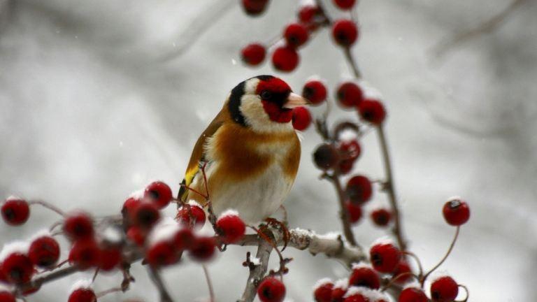 Gyönyörű szép 2017 madara