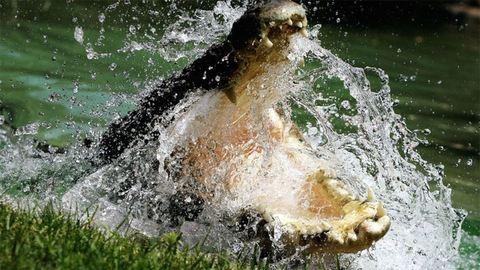 Nem erre számított a krokodillal szelfiző turista
