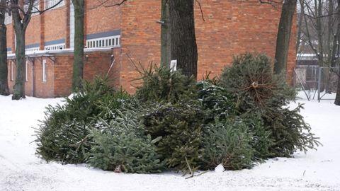 Ekkor kell kitenni a karácsonyfákat az utcára
