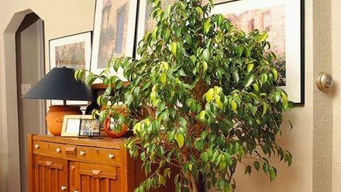 10 hasznos szobanövény a ház minden szobájába