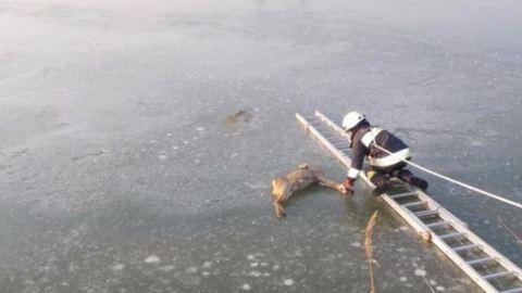 A tó jegéről mentették ki az őzet a tűzoltók Hajdúszoboszlón – fotók
