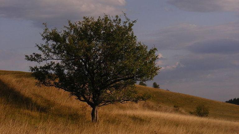 A vadalma lett az év fája