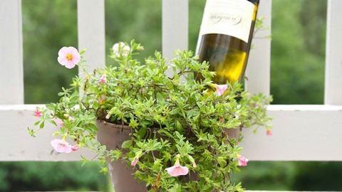 8 hasznos tipp a gyönyörű és egészséges növényekért