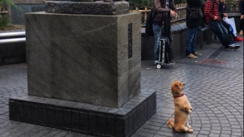 Kutyaszobor előtt szalutált a tisztelettudó eb – vicces fotó