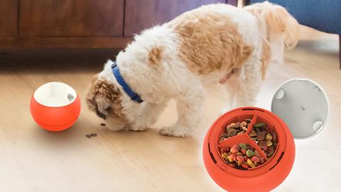 Robot játszhat a kutyáddal, amíg nem vagy otthon