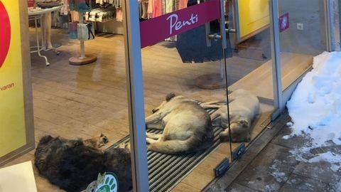 Így ússzák meg a fagyhalált Isztambul kóbor kutyái