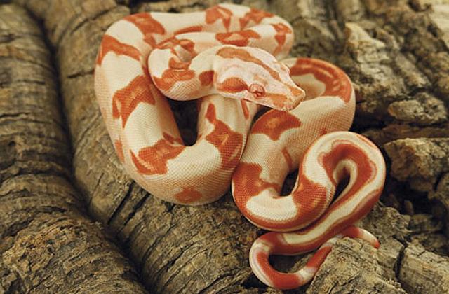 Kígyó tekergett a csepeli játsztéren