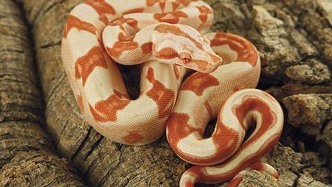 Döglött kígyót találtak egy csepeli játszótéren