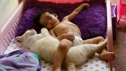Találkozása első napjától együtt alszik a kislány és a cica