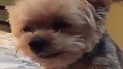 Az időjárás miatt szomorkodó kutyával mind azonosulni tudunk – cuki videó