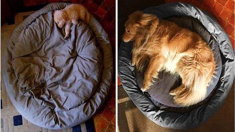 10 kutya, akik nem is tudják, milyen hatalmasra nőttek