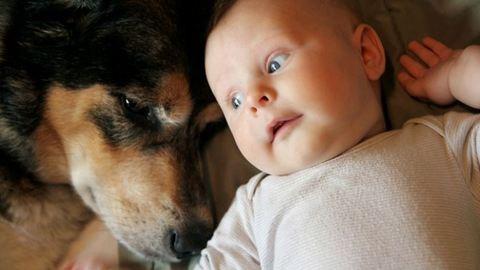 Bocsánatkérés a kutyámhoz a babám születése után