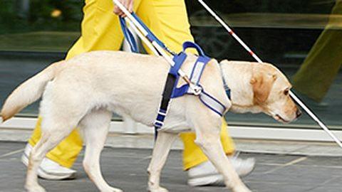 Kidobtak egy látássérült lányt egy pékségből, mert bevitte vakvezető kutyáját