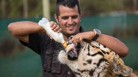 Feladták az otthonukat, hogy gondoskodhassanak 10 tigrisükről