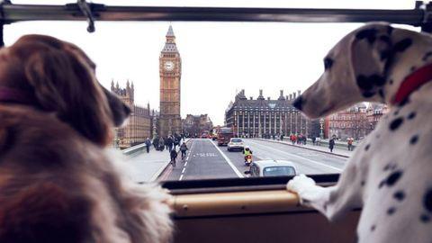 Londonban külön buszos városnézésre mehetnek a kutyák