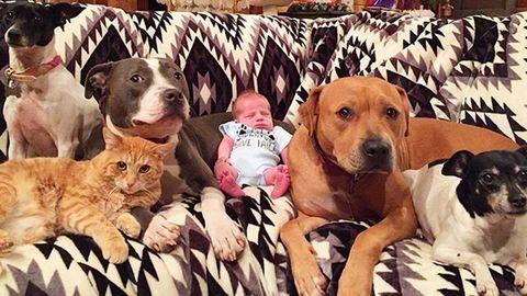 Cukiság: imádják a babát a család állatai