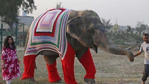 Megható: hatalmas pulcsikat kötnek az elefántoknak, hogy ne fázzanak